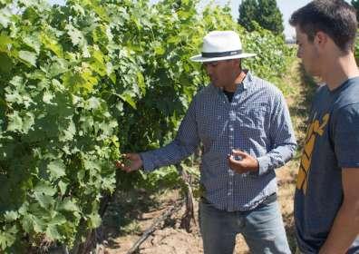 College Cellars vineyard instructor Joel Perez recruits technology