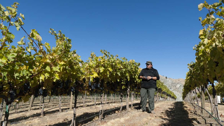 Washington wine's rising stars: Shane Collins