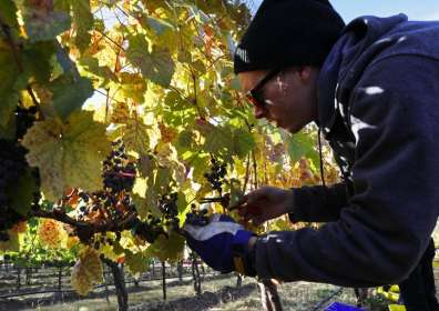 Washington's future winemakers have 4 in-state college options