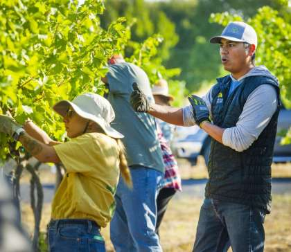 Walla Walla Community College's wine education starts with picking the grapes